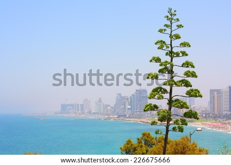 Agave and Tel Aviv - stock photo