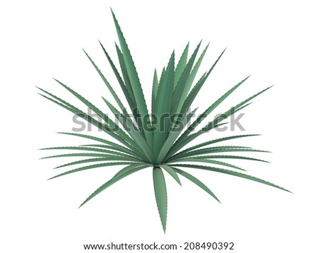 agave on a white background - stock photo