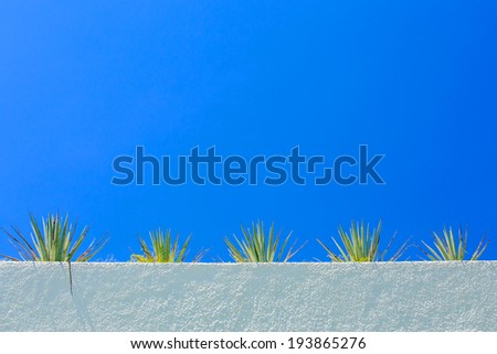 Agave plant on white parapet and blue sky in the background - stock photo