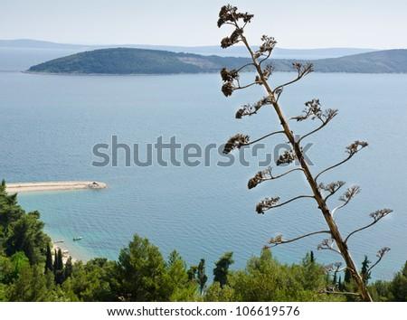 Agave tree and Adriatic seascape from Mount Marjan, Split, Dalmatia, Croatia - stock photo