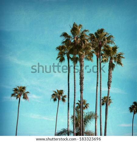 aged and worn vintage photo of palm trees - stock photo