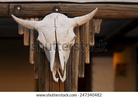Aged cow skull hanging on wooden post - stock photo