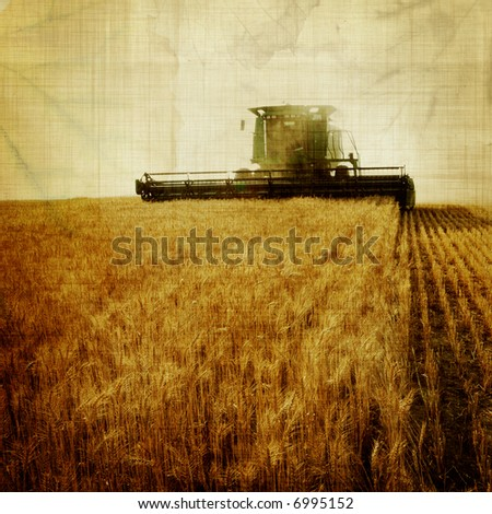 aged harvest - stock photo