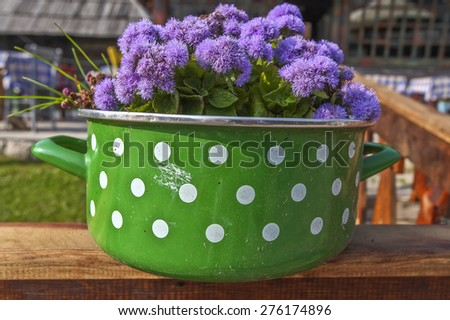 Ageratum floss in the pot - stock photo