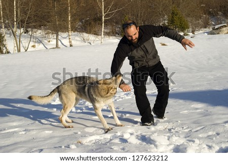 Aggressive Czechoslovakian wolf dog in a training of attack - stock photo