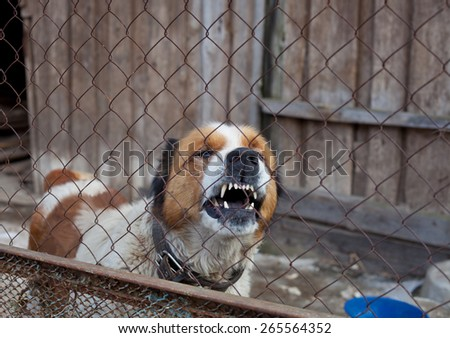 aggressive furious dog in cage, moscow watchdog - stock photo