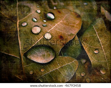 aging dried leaves photography - stock photo