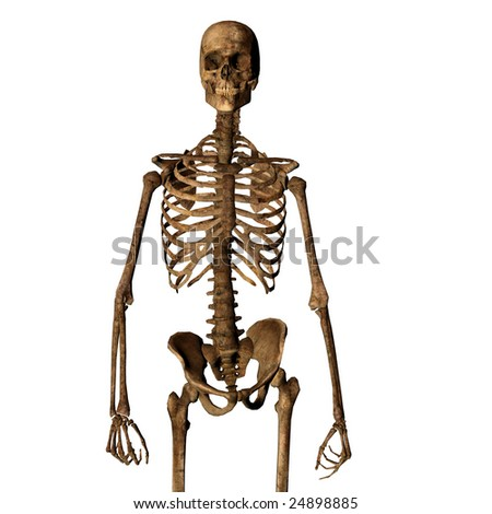Aging human skeleton isolated on white looking towards camera