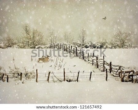 aging winter photography postcard - stock photo