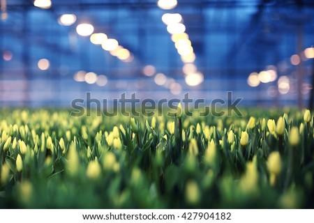 agribusiness greenhouse seedling spring - stock photo