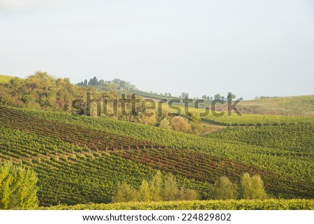 agricultural, agriculture, autumn, chianti, country, countryside, famous, field, hill, hillside, italy, landscape, light, pattern, siena, Tourism, touristic, tuscan, tuscany, vinefield, vineyard, wine - stock photo