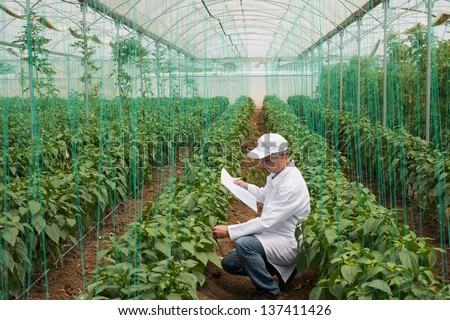 agricultural engineer in green house for quality control - stock photo