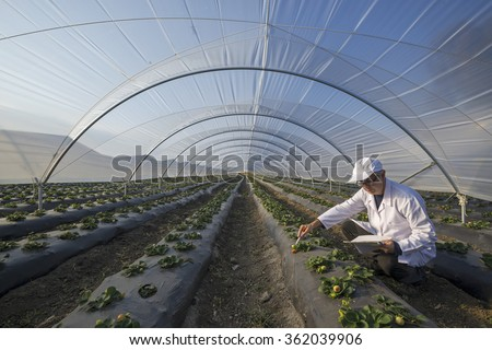 Agricultural engineer working in the greenhouse. Organic agriculture in greenhouses. - stock photo