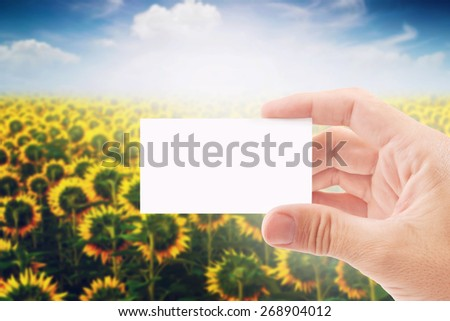 Agricultural Farmer Holding Blank White Business Card in Sunflower Field as Copy Space for message or Design. - stock photo