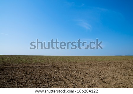 agricultural field in spring time and blue sky - stock photo