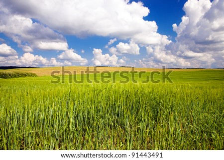 Agricultural field on which cereals grow