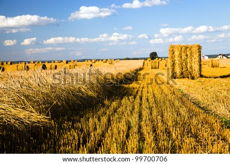 agricultural field on which wheat cleaning is carried out