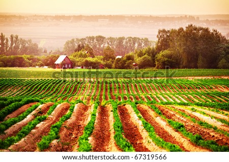 Agricultural field with a house in the background