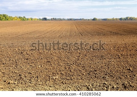 Agricultural field with rows of small plants - stock photo