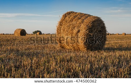 Agricultural field with straw bales after harvest.