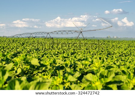 Agricultural irrigation system watering green fields on sunny summer day. - stock photo