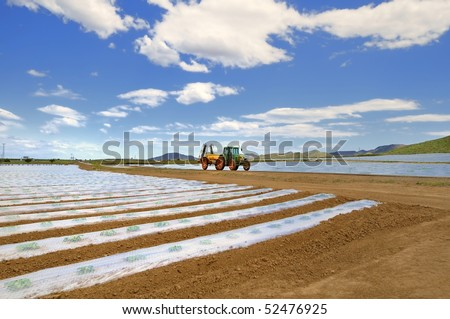 Agricultural landscape. A tractor with spray equipment passes amidst fields of vegetable crops in rows covered with polythene cloches. - stock photo