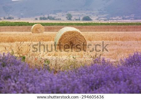 Agricultural landscape. Harvested field and blooming lavender in summer. Focus on hay bale - stock photo