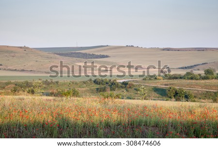 Agricultural landscape - in the foreground red poppies, trees, road, corn, barley, wheat - stock photo