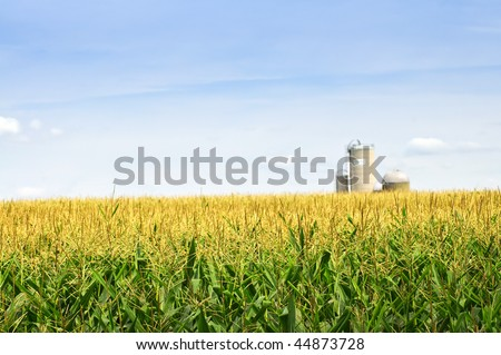 Agricultural landscape of corn field on small scale sustainable farm with silos - stock photo
