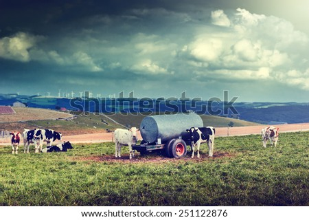 Agricultural landscape with cow herd at green field - stock photo