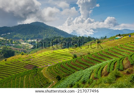 agricultural terraces in northern Thailand. - stock photo