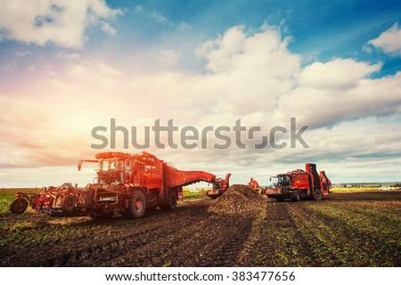 Agricultural vehicle harvesting sugar beets - stock photo