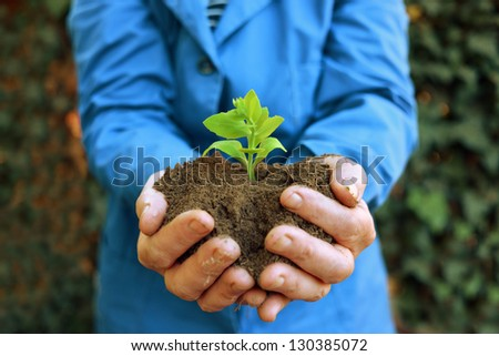 Agricultural worker holding green plant in the soil. Spring, growth, new life, ecology, environmental, nature preservation concept