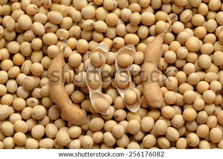 Agriculture, close up photo of soy bean after harvest - stock photo