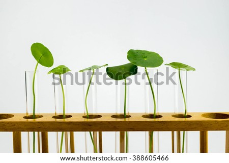 Agriculture concept, Close-up of Plant in the Test Tube light grey background - stock photo