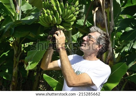 Agriculture: Farmer examining the banana plantation