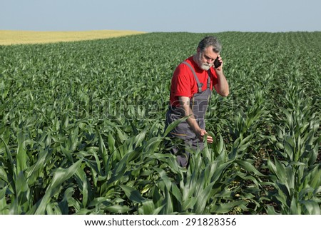 Agriculture, farmer or agronomist  inspect quality of corn and speaking with mobile phone - stock photo