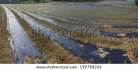 agriculture, food, farm in the Basque country - stock photo