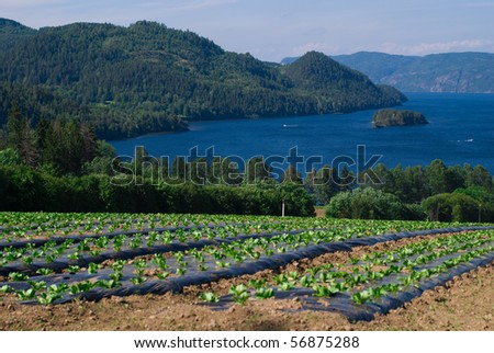 Agriculture in Norway - stock photo