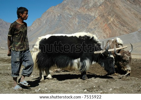 agriculture in The Himalayas - stock photo