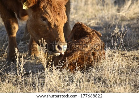 Agriculture: Livestock farming - stock photo