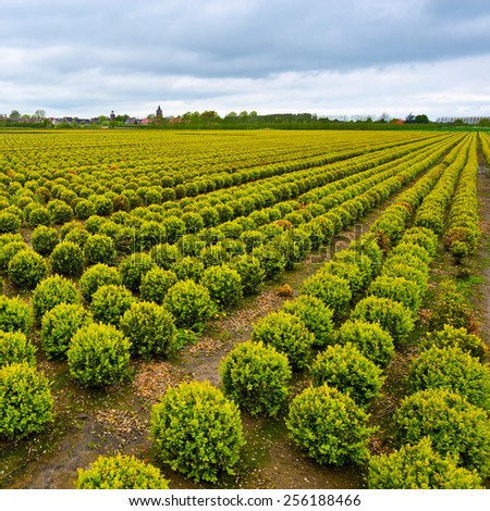 Agriculture on Land Reclaimed from the See in Netherlands - stock photo