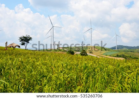 Agriculture on the mountain : Golden rice field and Wind Turbine produce electricity