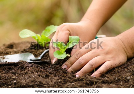 Agriculture,Plant,Soil,Plantation,Seeding,Seedling,Close up farmer hand planting vegetable for clean food concept - stock photo