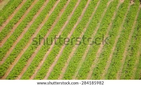 Agriculture plants in arid climate. Abstract background. - stock photo
