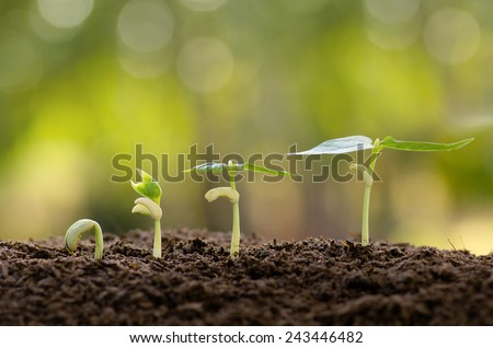 Agriculture seeding germinating and plant seed growing concept