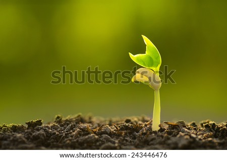 Agriculture, Seeding, Plant seed growing concept with organic compost fertilizer - stock photo
