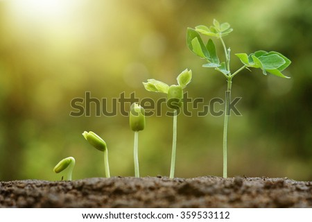 Agriculture. Young baby plants growing in germination sequence on fertile soil with natural green background.  Plant seedling - stock photo