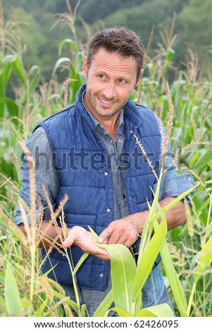 Agronomist analysing cereals in corn field - stock photo