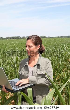 Agronomist in corn field - stock photo